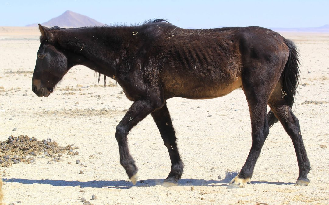 Wild horses fight for survival