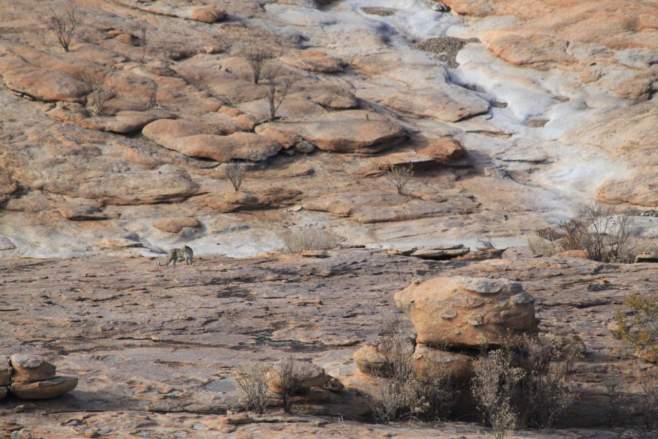 Leopard in den Erongo-Bergen