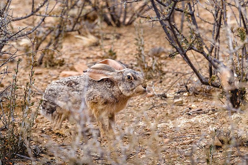 Easter bunny hidden in the Naukluft