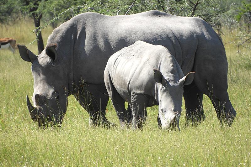Rhinos died in agony