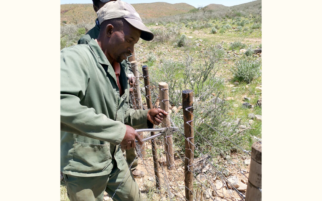 Fixing fences to protect pasture